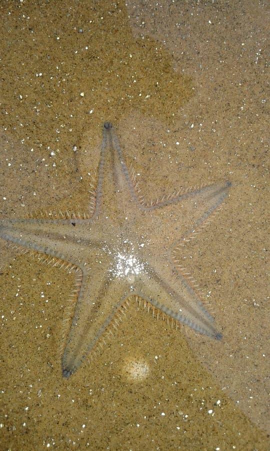 Les poissons d'étoile ou les étoiles de mer sont en forme d'étoile photo stock