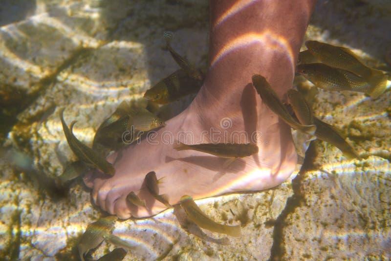 Les poissons de Cenotes Mexique sucent la peau morte de pieds photos stock