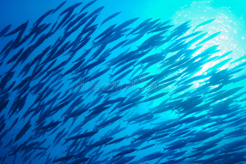 les poissons instruisent l'eau du fond images libres de droits