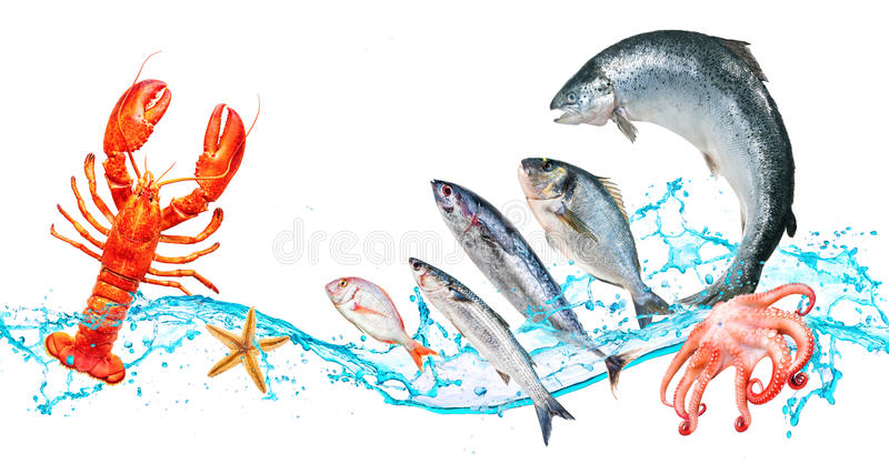 Les poissons sautent avec le watersplash image stock