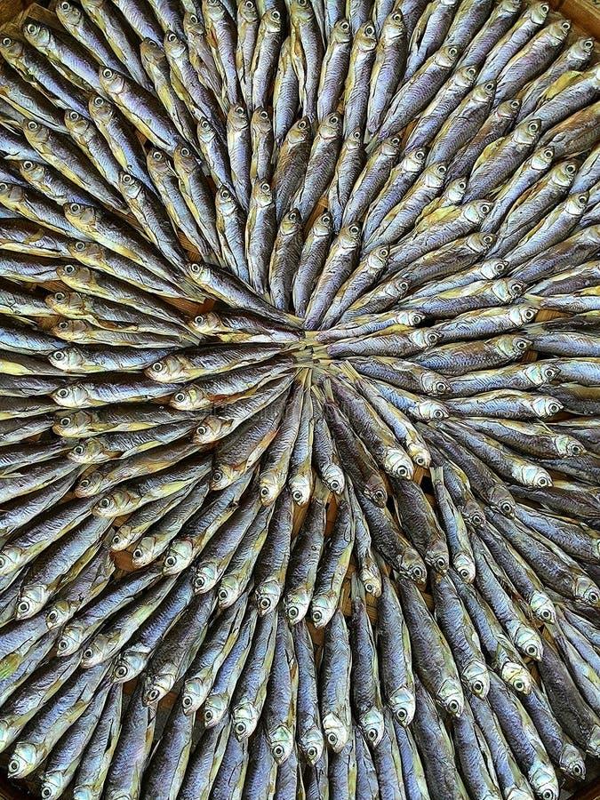 Les poissons secs image stock