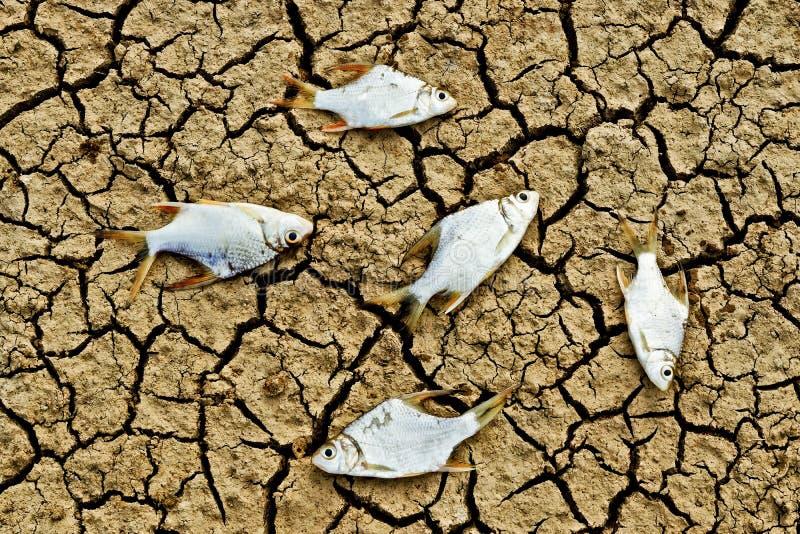 Les poissons sont morts sur la terre criquée images libres de droits
