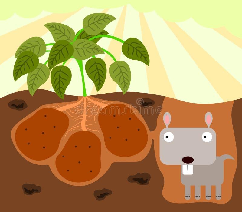 Les pommes de terre du Gopher illustration libre de droits