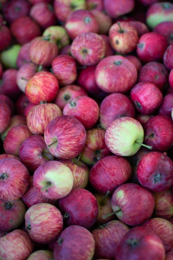 Les pommes fraîches des grands-mères font du jardinage image stock