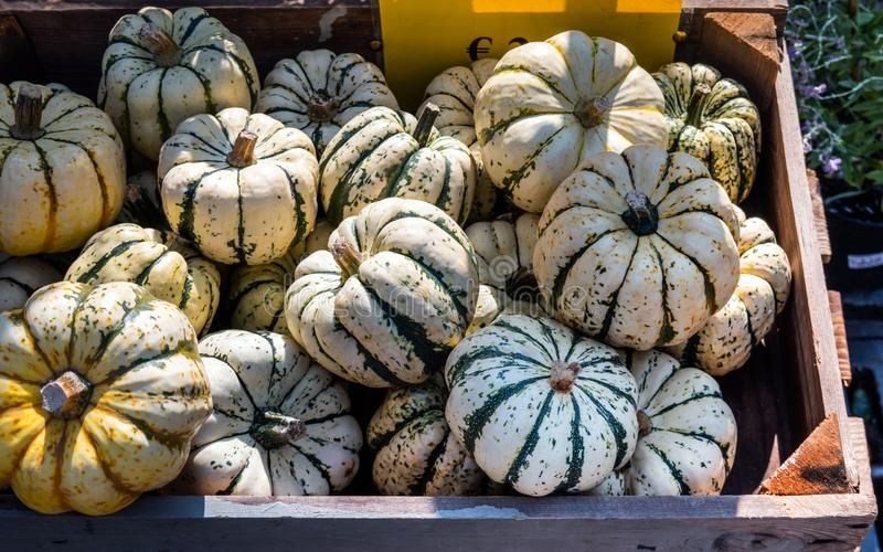 Les potirons empilent en vente au marché d'agriculteurs, blanc et vert, pour Halloween et thanksgiving image stock