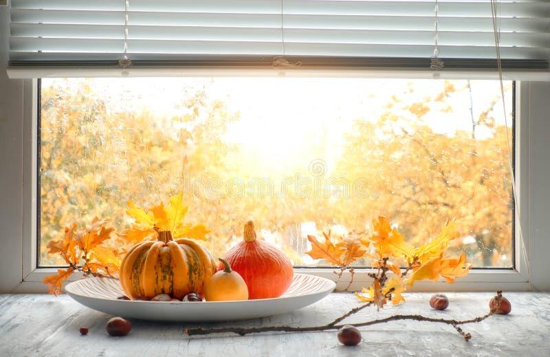Les potirons et le chêne jaune part par la fenêtre un jour pluvieux photo libre de droits
