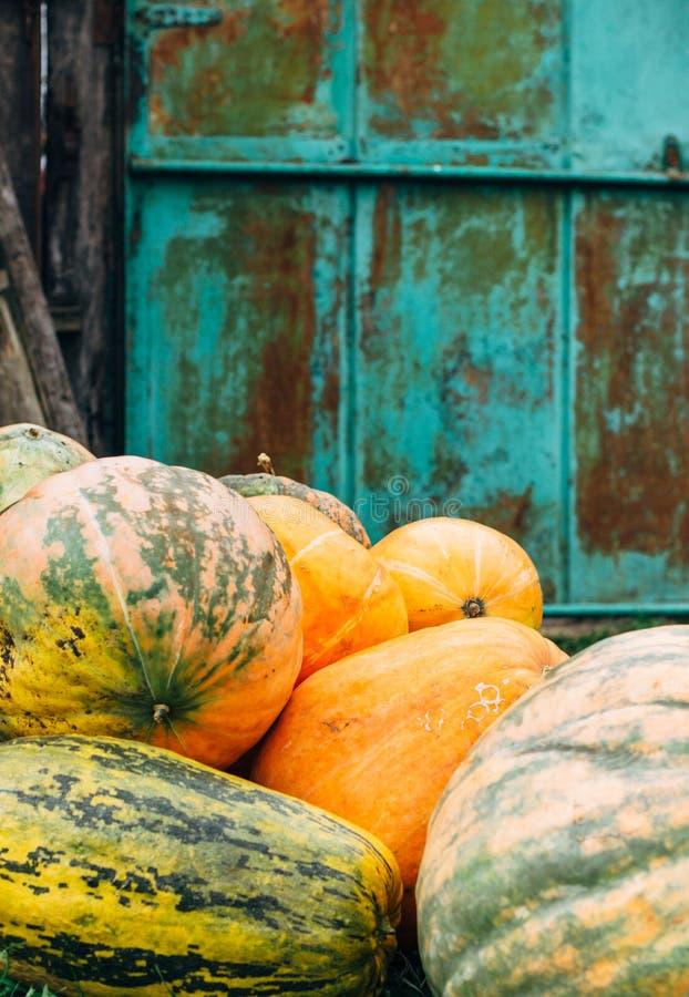 Les potirons oranges sur l'arrière-cour finissent la belle aigue-marine se sont rouillés mur photos stock