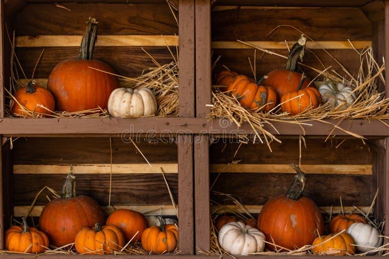 Les potirons, taille et miniature moyen, orange et blanc, affichage de la vie sur les étagères en bois se nichaient toujours en p photos stock