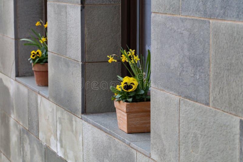 Les pots avec des pensées se tiennent sur le rebord de fenêtre image stock
