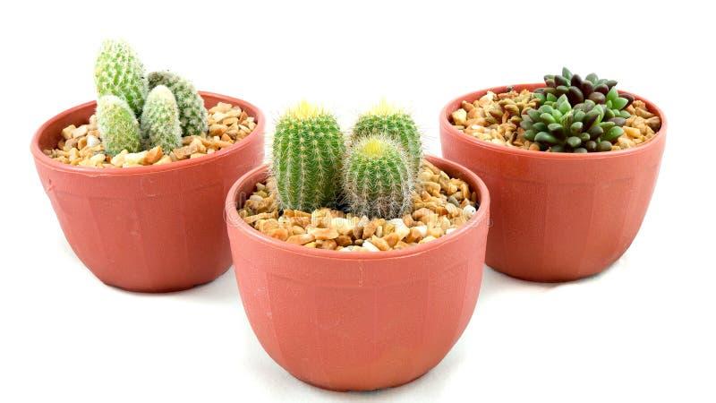Les pots de cactus photo stock