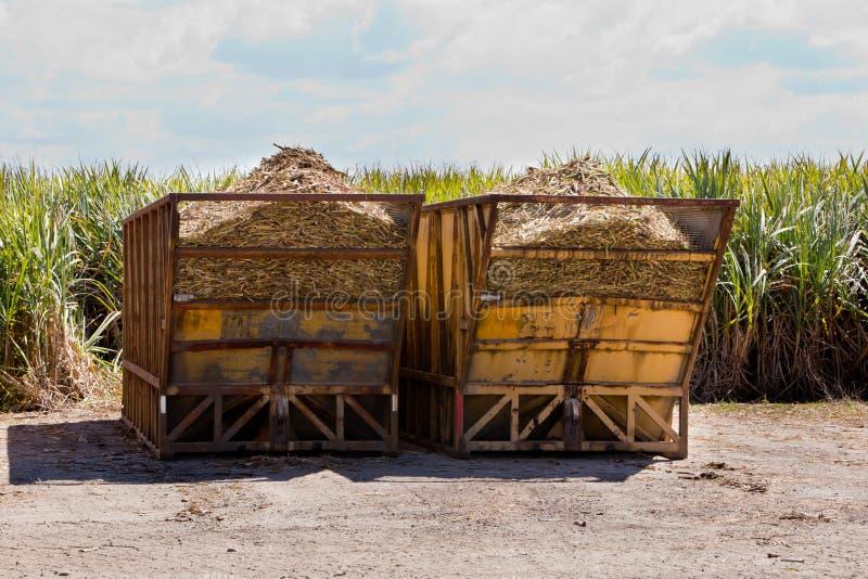 Les poubelles de récolte de Sugar Cane avec la canne à sucre cultivent dans le domaine derrière images libres de droits