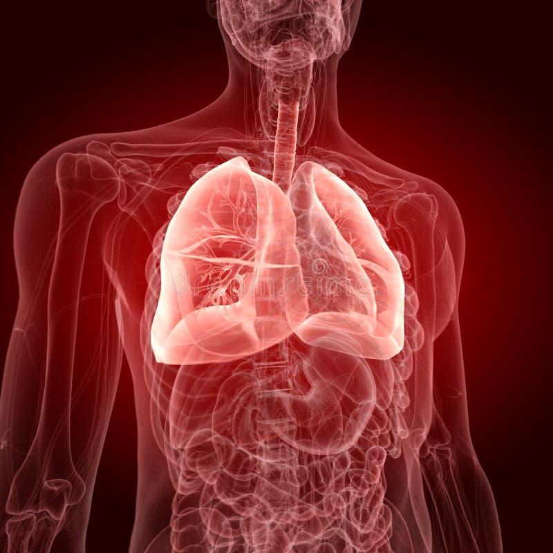 Les poumons illustration stock