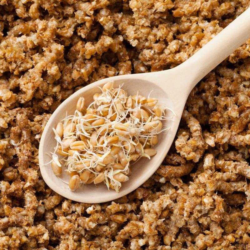 Les pousses de blé en cuillère et terre en bois ont poussé le backgro de grains photos stock