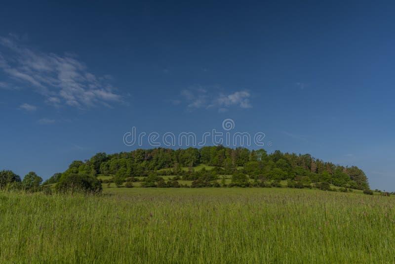 Les prés de champs pâturent la terre dans le matin de couleur de parc national au printemps photographie stock