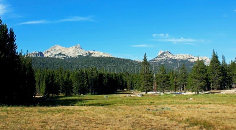 Les prés de Tuolumne aménagent en parc, Yosemite images libres de droits