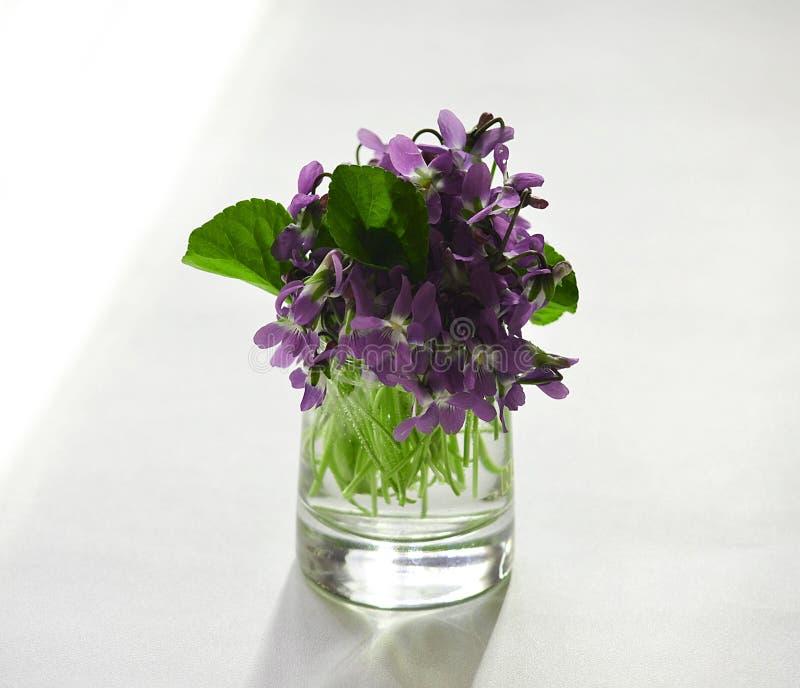 Les premières fleurs photographie stock libre de droits