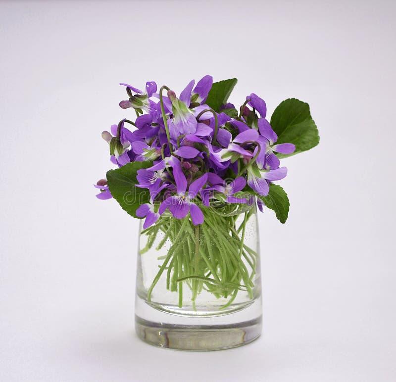 Les premières fleurs image libre de droits