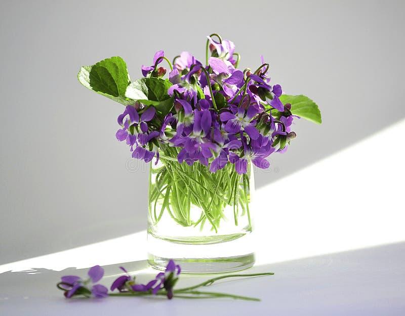 Les premières fleurs photo libre de droits