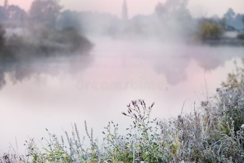 Les premiers gels pendant les jours d'automne Herbe et fleurs en gelée sur la berge dans le brouillard pendant le début de la mat photos stock