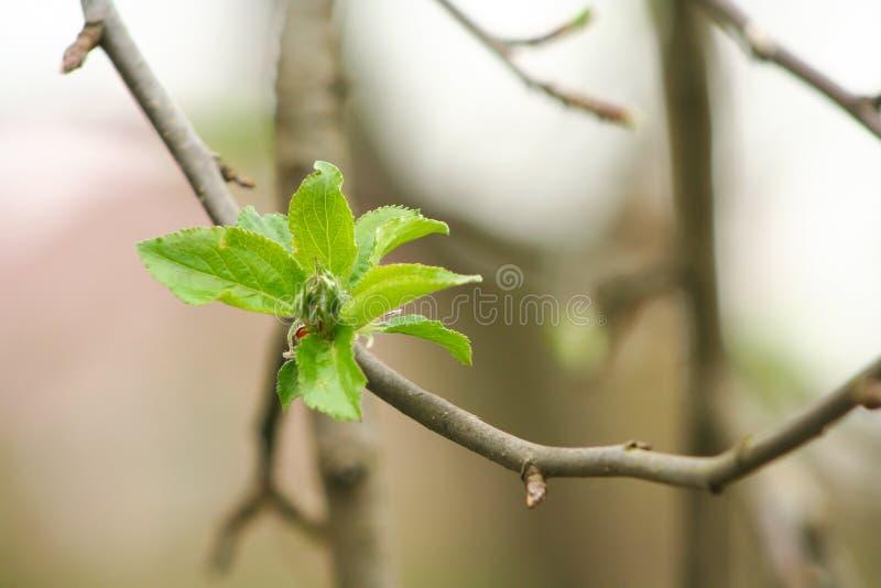 Les premiers signes du ressort Les fleurs se d?veloppent et fleurissent photo stock