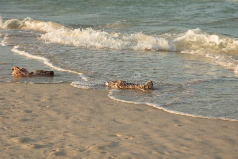 Les produits en plastique obstruent la nature de plus en plus Bouteille en plastique couverte dans des bernaches de mer et des fo photo stock