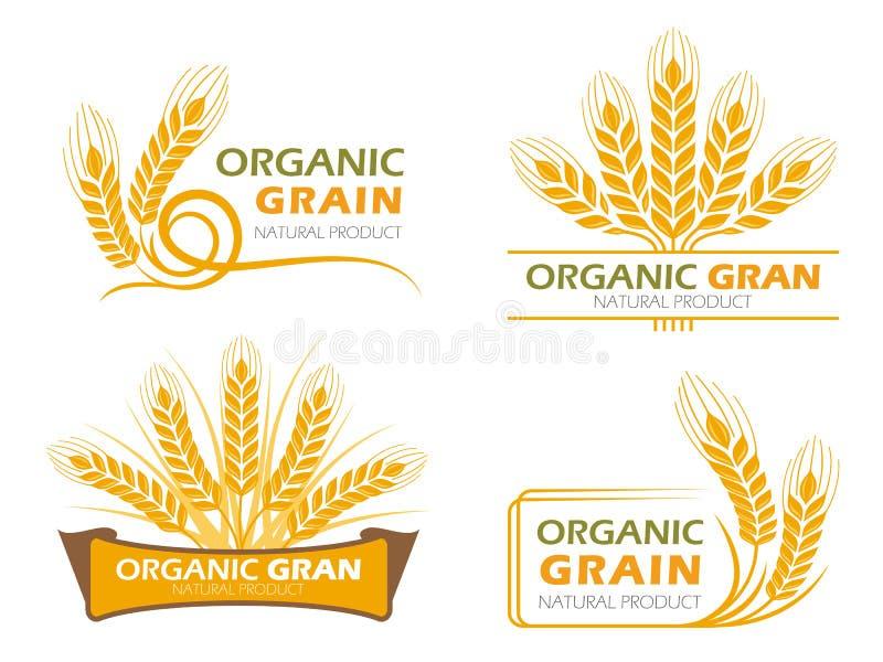 Les produits organiques de grain de paddy de riz jaune d'orge et la bannière saine de nourriture signent la scénographie de vecte illustration libre de droits