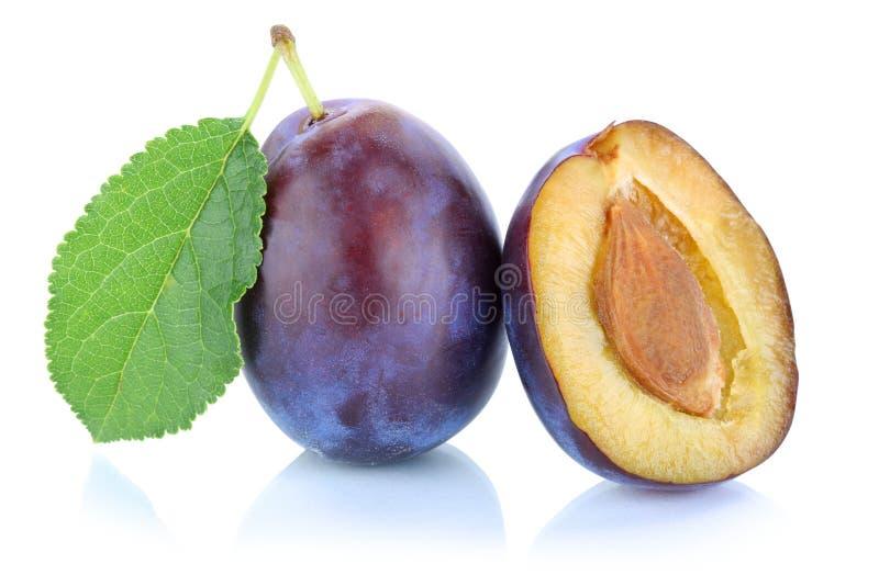 Les pruneaux de prune de prunes taillent le fruit frais d'isolement sur le blanc photos stock