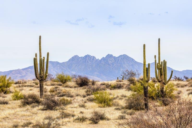 Les quatre crêtes et Saguaros photographie stock