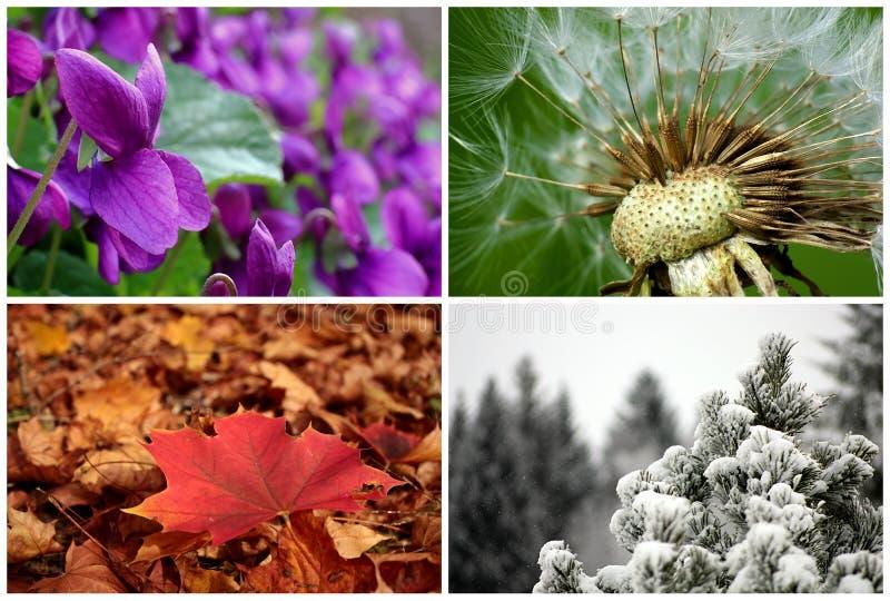 Les quatre saisons photo stock