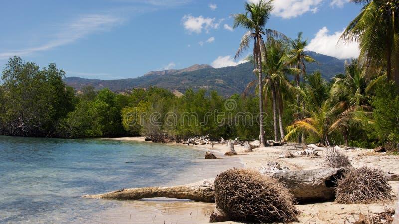 Les racines vers le bas tombés des palmiers pendant le matin à la côte rayent sur une plage blanche de sable avec les palmiers sa photo libre de droits