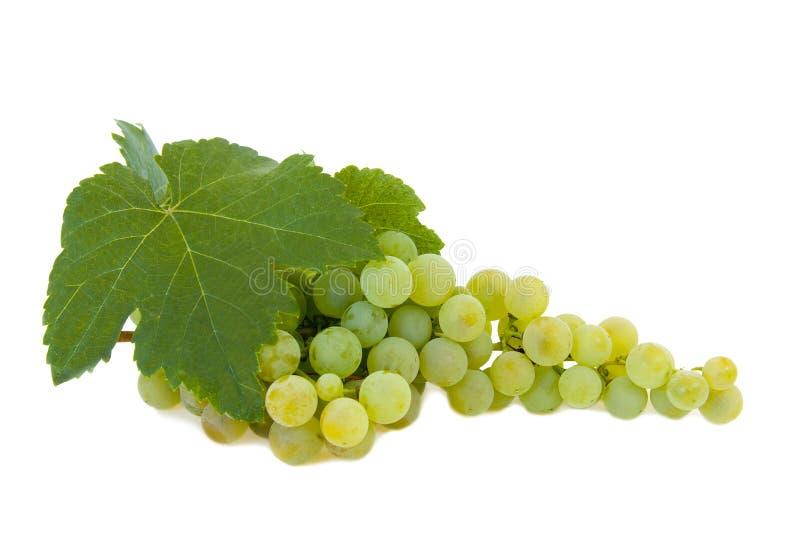 Les raisins ont isolé photos libres de droits