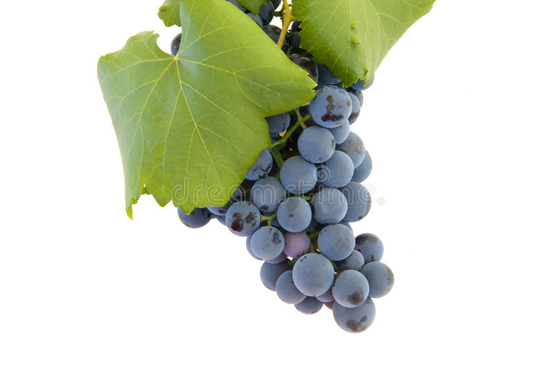 Les raisins ont isolé photos stock