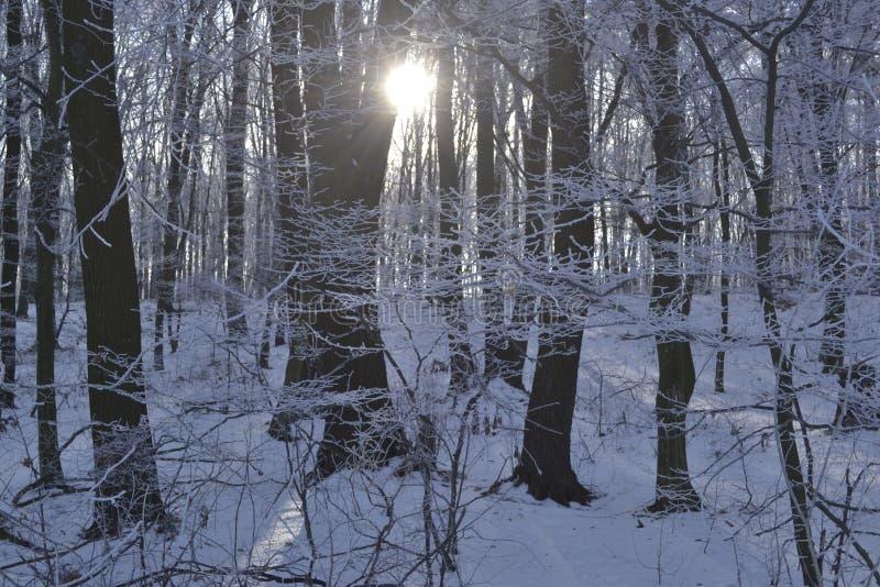 Les rayons d'un soleil traversent le barrelsis photographie stock libre de droits