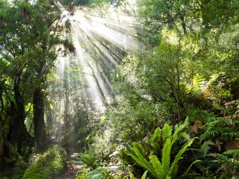 Les rayons de la lumière du soleil rayonnent la jungle tropicale dense de cuvette image libre de droits