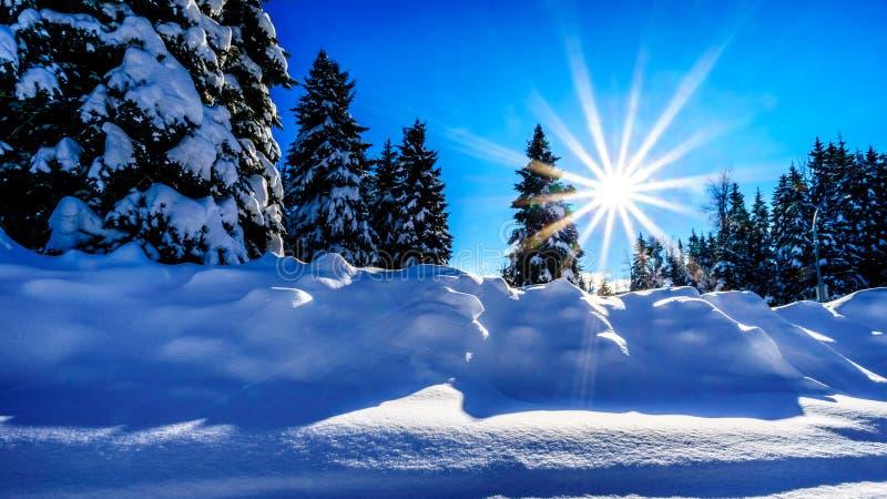 Les rayons de soleil du bas soleil d'hiver au-dessus d'une neige profonde emballent images stock
