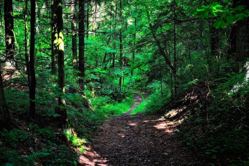 Les rayons de Sun dans la forêt photo stock