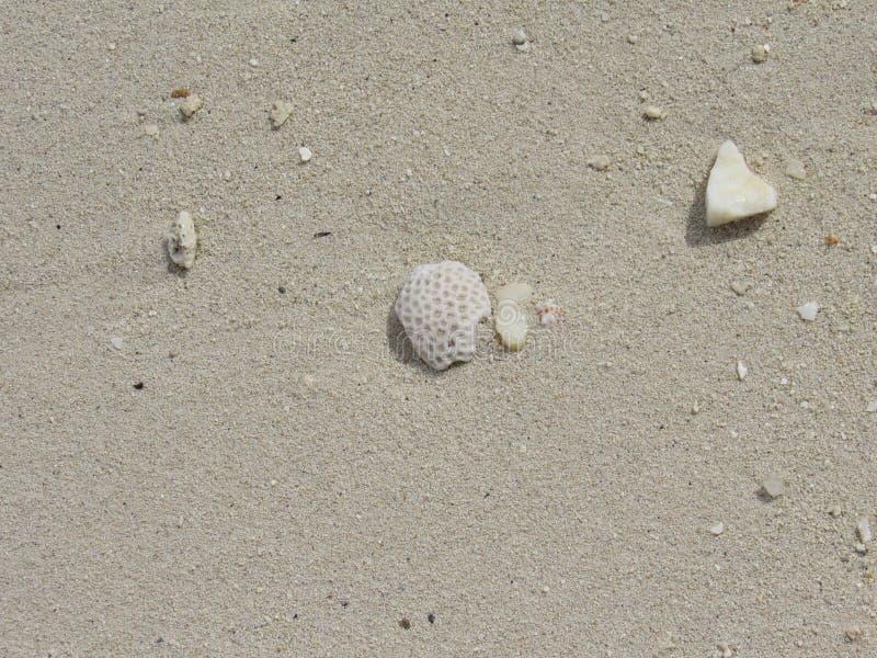 Les ressacs ont laissé leurs trésors sur le sable photo libre de droits