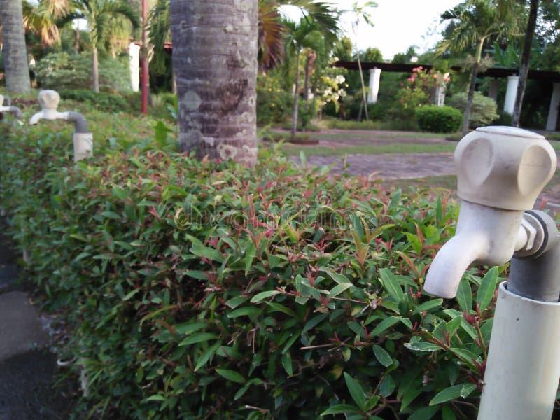 Les robinets d'eau ont aligné en parc photographie stock