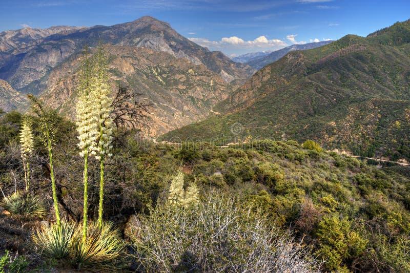 Les Rois Canyon photos stock