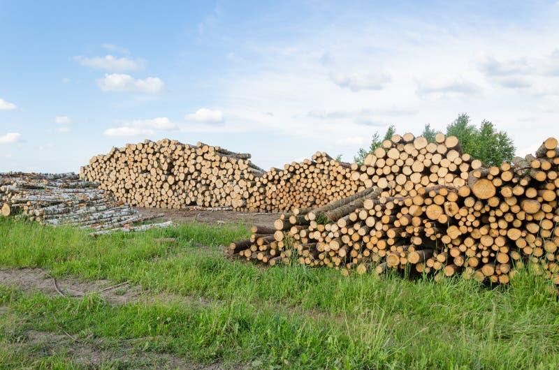 Les rondins de bouleau et de pin de carburant de bois de chauffage empilent la forêt photos libres de droits