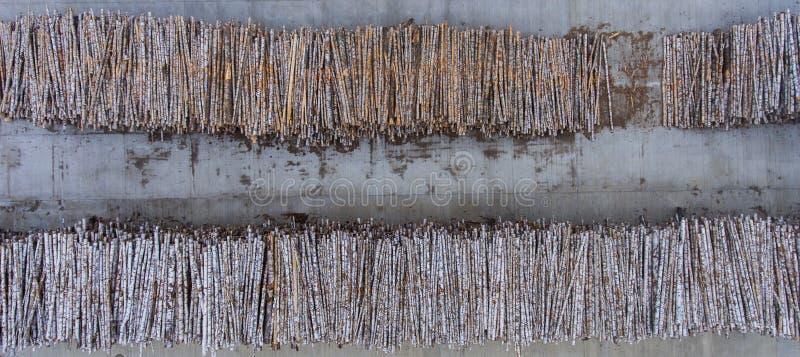 Les rondins sont étendus dans deux rangées en plein air image stock