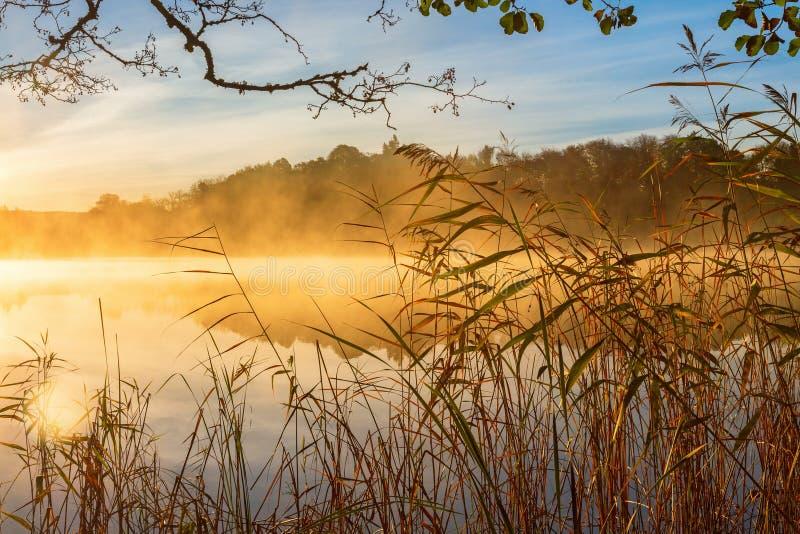 Les roseaux au bord et à l'automne de l'eau embrument photos libres de droits