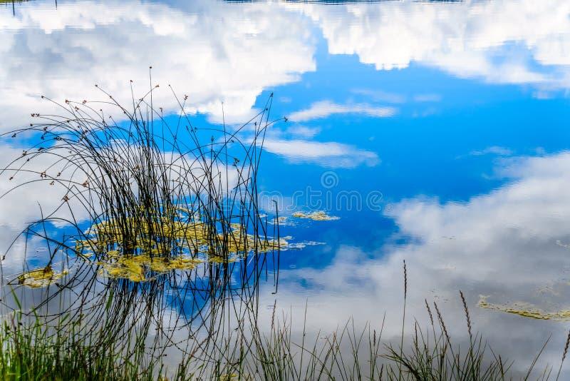 Les roseaux dans le lac Trapp avec la réflexion de ciel bleu et de nuages sur l'eau lisse apprêtent image stock