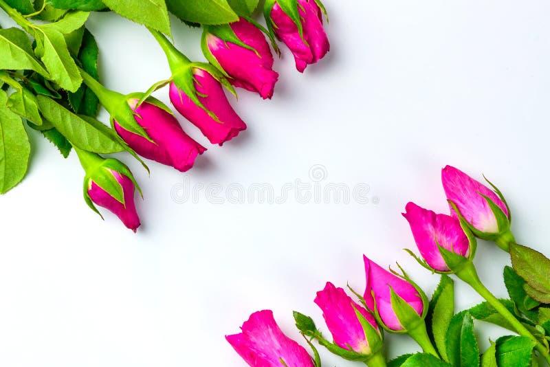 Les roses roses arrangent à la frontière de configuration d'appartement de vue supérieure avec l'espace de copie, f images libres de droits