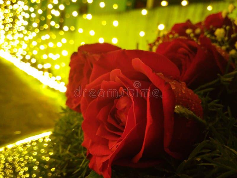 Les roses et la douleur ont des épines image libre de droits