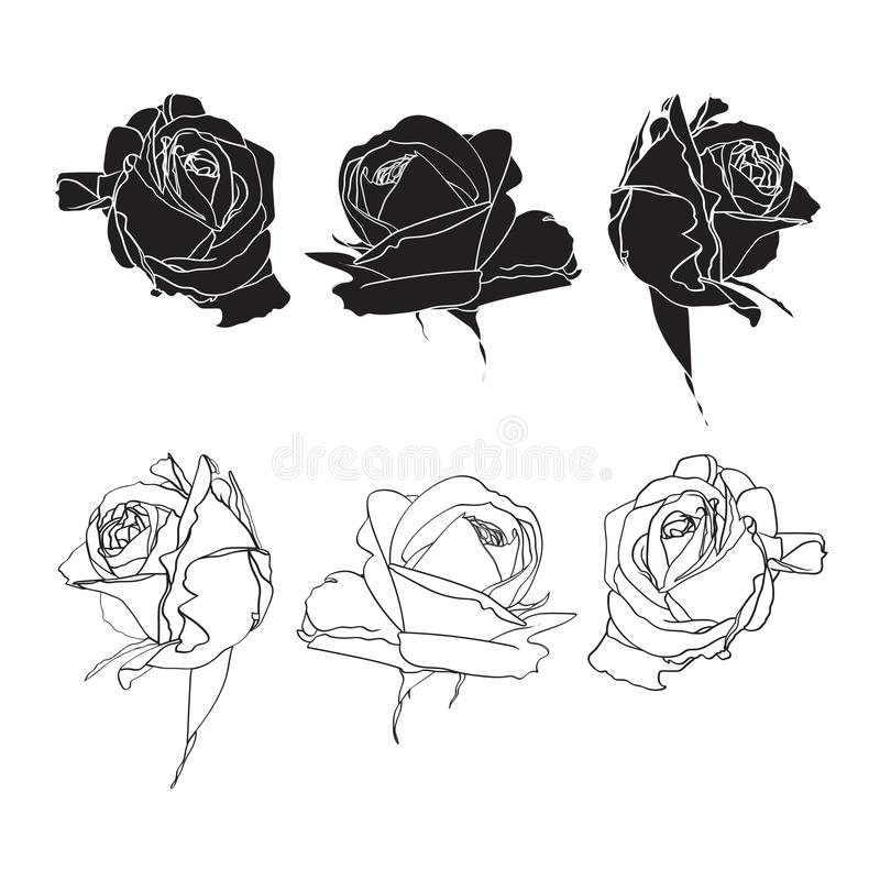 Les roses noires et blanches rayent l'ensemble d'isolement sur le fond blanc illustration libre de droits