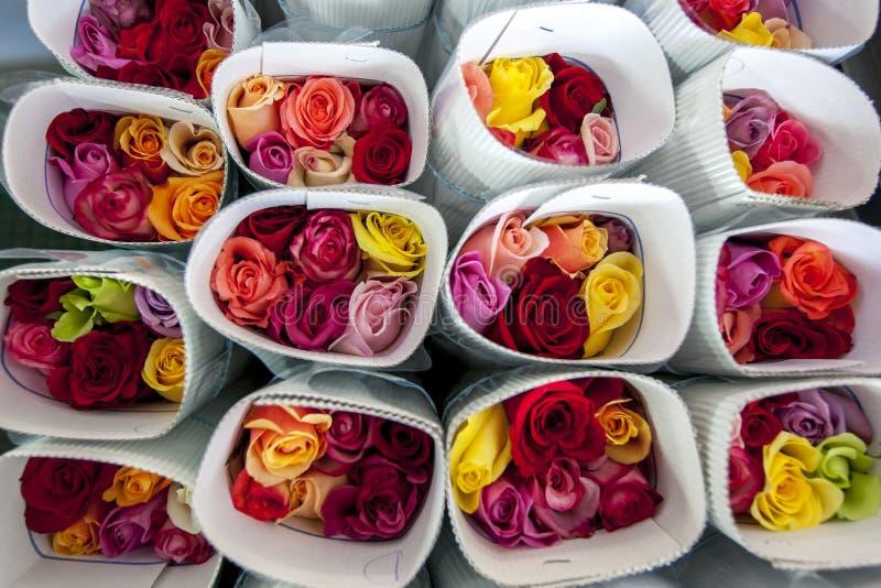 Les roses ont emballé prêt pour l'exportation à la plantation de roses de Compania de La de Hacienda près de Cayambe en Equateur image libre de droits