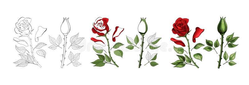 Les roses remettent le dessin et colorées Un bouton de rose de floraison Illustration de vecteur illustration stock