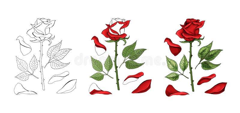 Les roses remettent le dessin et colorées Un bouton de rose de floraison Illustration de vecteur illustration de vecteur