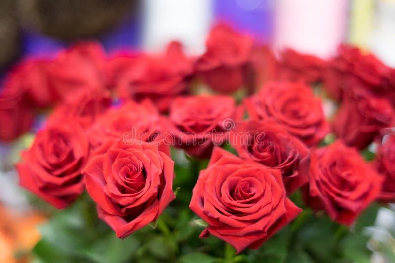 Les roses rouges avec dans les rangées regardent majestueux image stock